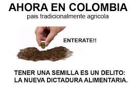 transgenicos colombia mentiras